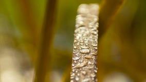在叶子的雨 免版税图库摄影