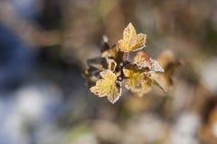 在叶子的雪 免版税库存图片