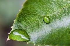 在叶子的露滴在被弄脏的轻的背景 免版税库存图片