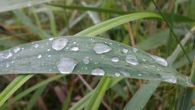 在叶子的露水 免版税库存照片