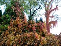 在叶子的颜色的秋天 免版税库存图片