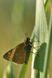 在叶子的飞蛾蝴蝶 库存图片