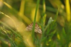 在叶子的飞蛾蝴蝶 免版税库存照片