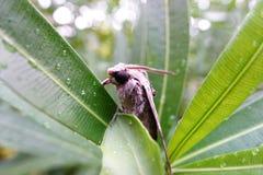 在叶子的飞蛾 库存图片