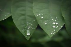 在叶子的水下落。 免版税图库摄影