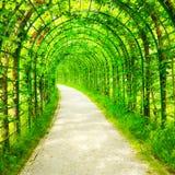 在叶子的绿色隧道 图库摄影