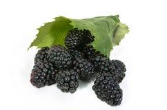 在叶子的黑莓 免版税库存图片