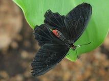 在叶子的蝴蝶 库存图片