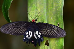 在叶子的蝴蝶 免版税库存图片