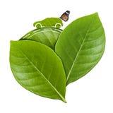 在叶子的Eco汽车 免版税库存照片