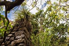 在叶子盖的印加墙壁,沿印加人足迹 免版税库存图片