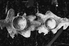 在叶子背景的两只金戒指 免版税库存照片