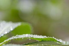 在叶子背景的水下落 免版税库存照片