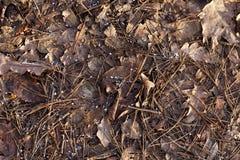 在叶子,特写镜头的雪花 免版税库存图片