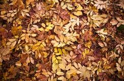 在叶子ground/a地毯的秋叶  免版税库存照片
