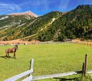 在吃草修饰的马农场的谷 库存图片