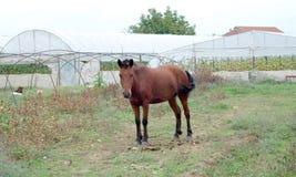 在吃草领域的马在村庄 免版税库存照片