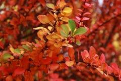 在各种各样的颜色的秋天 免版税库存照片