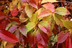 在各种各样的颜色的秋天 图库摄影