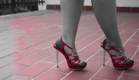 在合身的长袜的性感的腿 库存照片