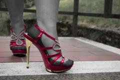 在合身的长袜的性感的腿 免版税库存照片