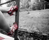 在合身的长袜的性感的腿 库存图片