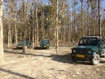 在吉普的森林探险队 库存照片