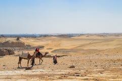 在吉萨棉沙漠的骆驼护卫舰 免版税库存照片