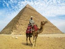 在吉萨棉金字塔前面的骆驼人 库存照片