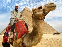 在吉萨棉金字塔,开罗,埃及前面的骆驼人 库存照片
