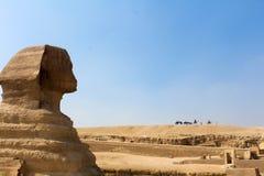 在吉萨棉,开罗描出伟大的狮身人面象的射击 免版税库存照片