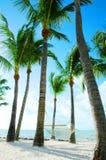 在吊床棕榈树之中 免版税库存照片
