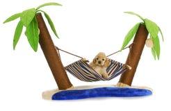 在吊床的小狗 免版税库存图片