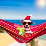 在吊床的狗夏天圣诞节假日 图库摄影