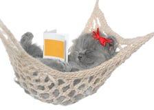在吊床的逗人喜爱的灰色小猫睡眠有开放书的。 库存图片