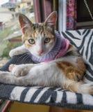 在吊床的镶边猫 免版税库存照片