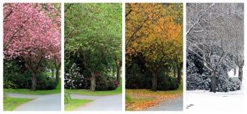 在同一条街道上的四个季节 免版税库存图片