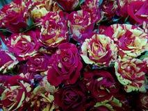在同色而浓淡不同红色的大玫瑰色花束和黄色 免版税库存图片
