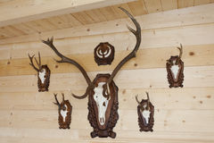 在名望墙壁上的猎人trophyes  免版税库存图片