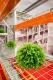 在后勤仓库的绿色树,后勤学概念,生态概念,运输概念 库存图片