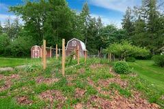 在后院的家庭菜园有两个红色谷仓棚子的 免版税图库摄影