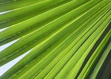 在后面光的棕榈叶 图库摄影