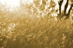 在后面光的秋天草 免版税库存图片