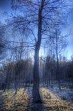 在后面光的被烧的树 免版税库存照片