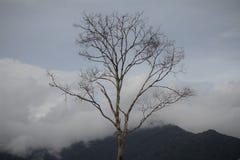 在后面山的树 库存图片