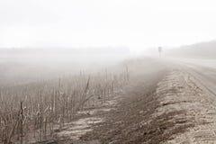 在向日葵的领域的雾 库存图片