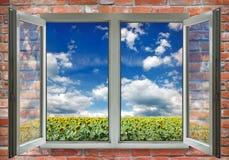 在向日葵背景的开窗口 库存图片