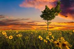 在向日葵领域的偏重树 免版税库存图片