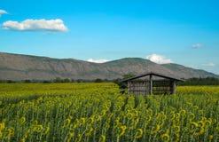 在向日葵领域的小小屋 免版税库存照片