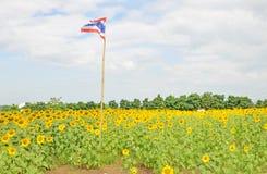 在向日葵领域的泰国旗子 库存图片
